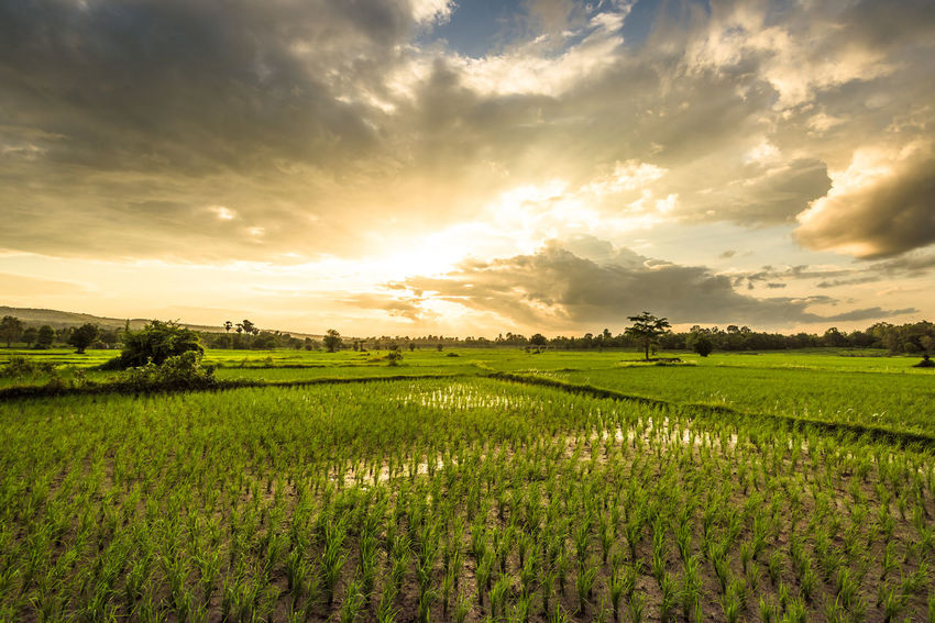Beautiful Nature Clouds And Sky Farmer People Photography Ricefield View Sunset Thailand
