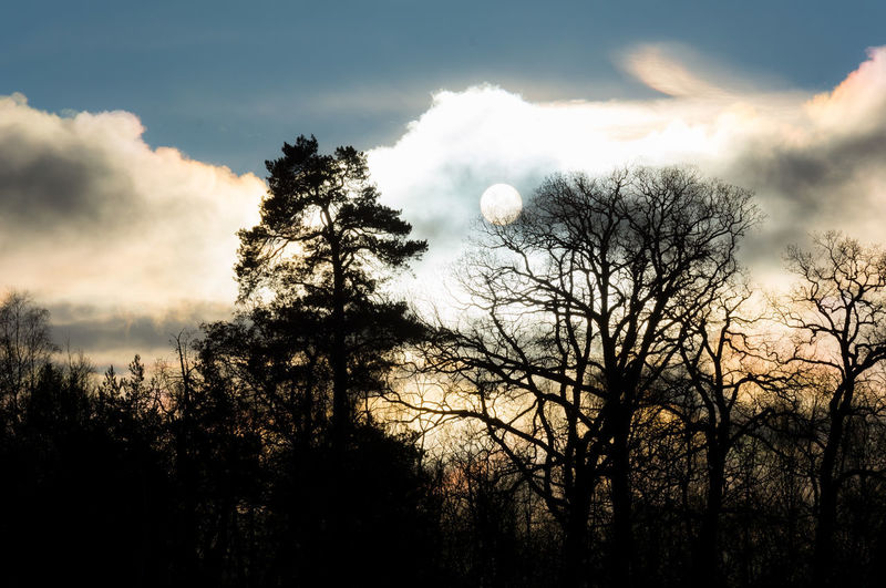 The sun was hiding behind massive clouds, creating a cool effect! Sunlight Bare Tree Beauty In Nature Cloud - Sky Day Nature Outdoors Scenics Silhouette Sky Sun Tranquility Tree