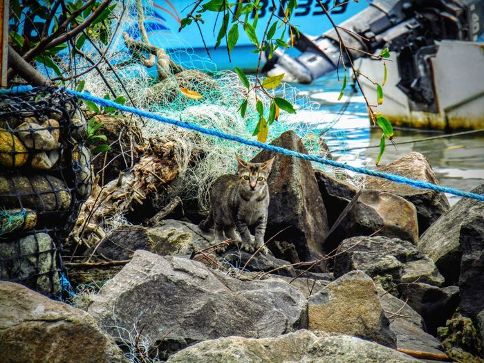 Firstpicture2016 Canonsx410is Cat Photography Water Outdoors Nature