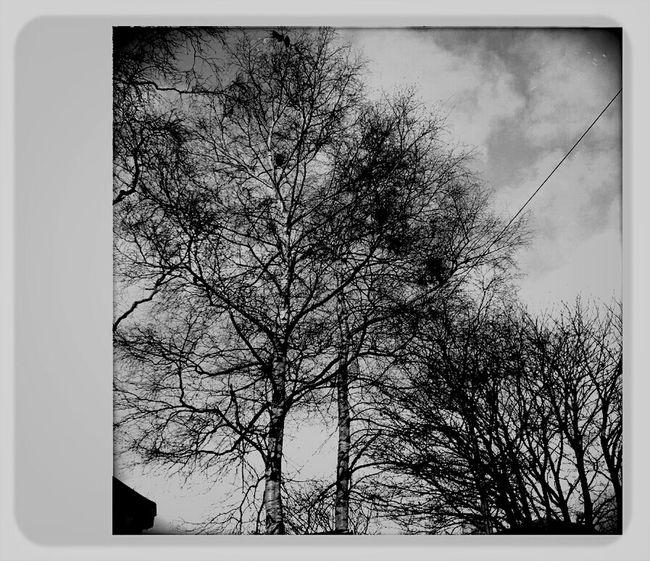 Monochrome , Taking Photos At Calderbank