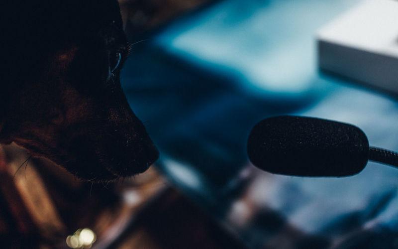 High angle view of dog looking at camera
