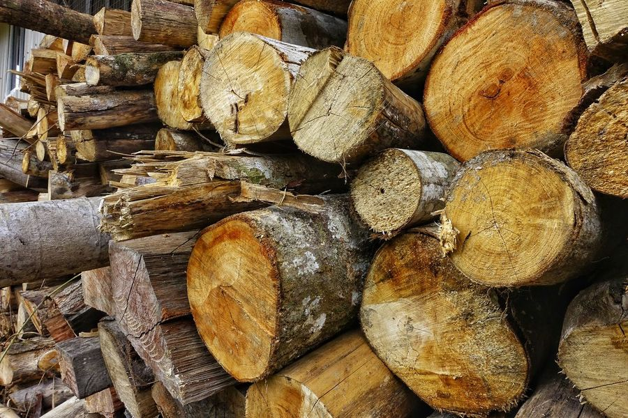 Full Frame Large Group Of Objects Backgrounds No People Close-up Healthy Eating Food Day Outdoors Freshness Stock Image Stock Images Stock Photo Stock Photography Stock Photos Woods Woodstock Woods And Color Wood Wood - Material WoodLand Logs Logs Pile Logs In Water Logstash