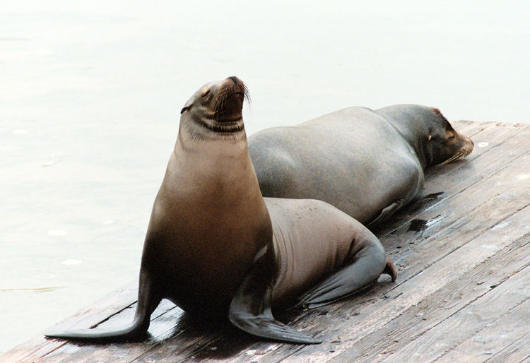 Low angle view of sea lions on beach