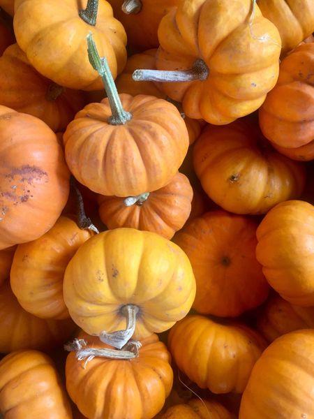 🎃🍂 Freshness Pumpkin Orange Color Food Healthy Eating Vegetable Pittmeadowsbc Beautifulbc ShopLocal Abundance Market Market Stall Close-up Farmer Market