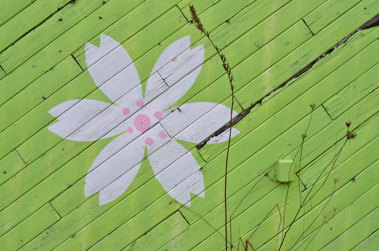 painted wall of Japanese restaurant Abandoned Buildings Close-up Day Deterioration Green Color Green Color No People Outdoors Outdoors❤ Painted Flower Painted Wall