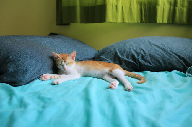 i want to leave my office and sleep like her Animal Themes Bed Bedroom Cat Cat Lovers Catnapping Domestic Animals Domestic Cat Feline Indoors  Lying Down Mammal No People One Animal Pets Pillow Relaxation Sleeping Small Cat