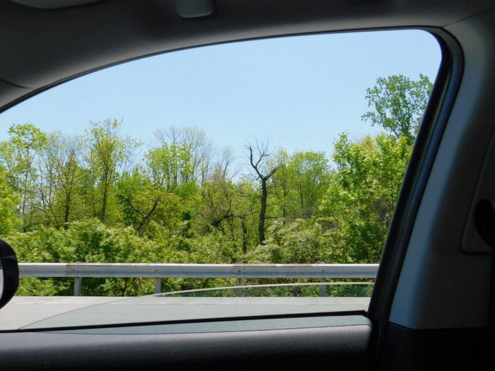 CarRide Highways&Freeways View From Above Car Transportation Vehicle Interior Land Vehicle Mode Of Transport Car Interior Window Tree Glass - Material No People Windshield Day Travel Side-view Mirror Windscreen Road Trip Journey Vehicle Seat Car Point Of View Nature