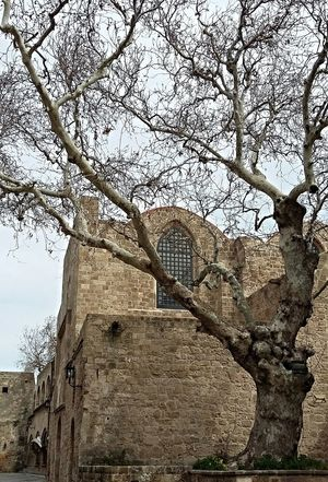 Castle View  Tree And Sky Tree_collection  Old Town Taking Photos Check This Out Eyem Masterclass Ancient Architecture Popular Photos Popular