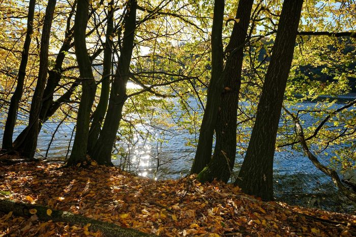 Am See  Goldener Oktober Herbst Autumn Beauty In Nature Branch Day Forest Growth Landscape Nature No People Outdoors River Scenics Sky Tranquil Scene Tranquility Tree Tree Trunk Wasser Water