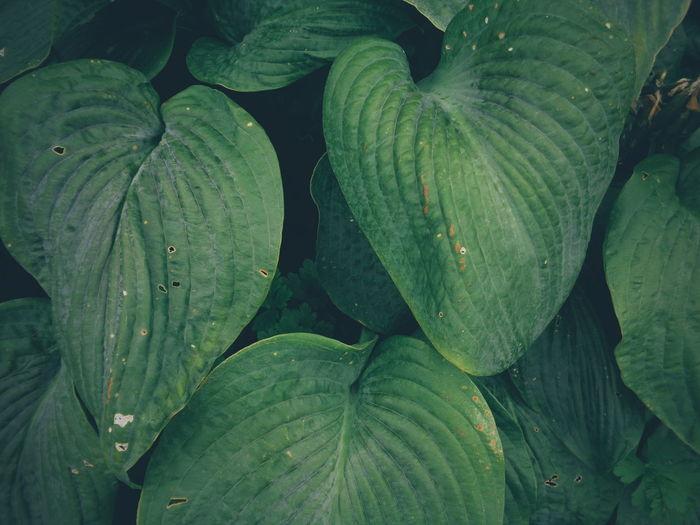 Full frame shot of wet leaves