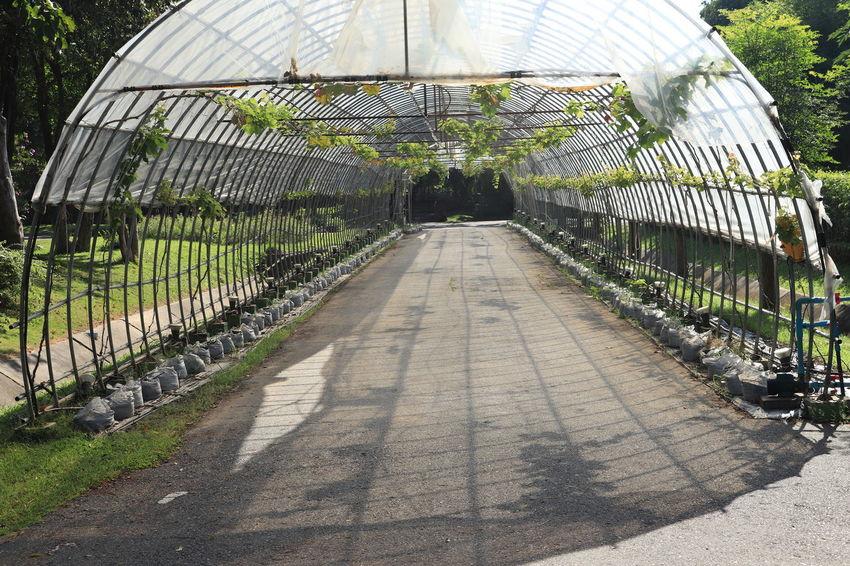 อุทยานหลวงราชพฤกษ์ Shadow Architecture The Way Forward Sunlight Direction Nature Day Diminishing Perspective Built Structure Plant Outdoors Pattern Metal Footpath Fence Tree Greenhouse Real People Bridge One Person ราชพฤกษ์