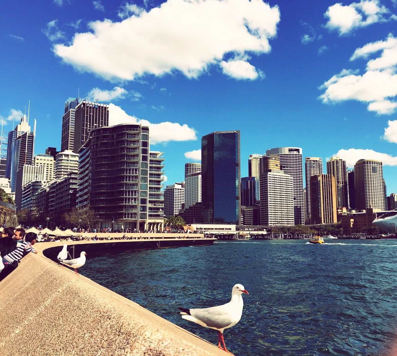 architecture, skyscraper, building exterior, built structure, cloud - sky, sky, city, day, bird, sea, water, animal themes, outdoors, modern, seagull, urban skyline, one animal, no people, animals in the wild, cityscape, nature