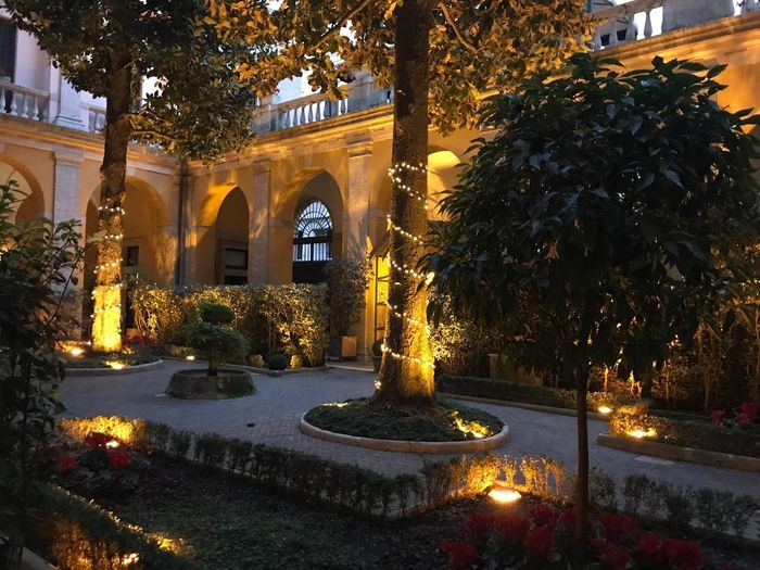 Christmas lights near Vatican Tree Illuminated Plant Architecture Nature Built Structure Night Christmas Decoration Winter Building Exterior Snow Art And Craft Lighting Equipment No People christmas tree Christmas Lights Building Holiday