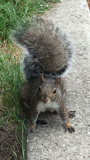 Playing with the squirrels along the lake at Hollywood Beach in Chicago. They are so sweet they come right up to you. Animal Themes Wildlife One Animal Outdoors Waterfront Cityscape Chicago Pspauly63