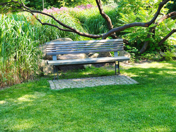 Jeans Brown Photography - Jeans Brown Photography Absence Beauty In Nature Bench Day Empty Grass Green Color Growth Land Nature No People Outdoors Park Park - Man Made Space Park Bench Plant Relaxation Seat Tranquility Tree Trunk