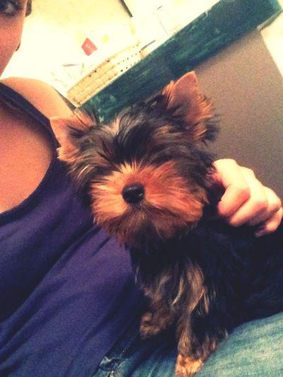 Dog Darling♡ Hello World