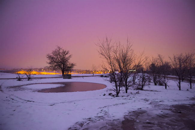 colores oficina te night HUAWEI Photo Award: After Dark Tree Snow Cold Temperature Winter Ice Rink Frozen Water Winter Sport Frozen