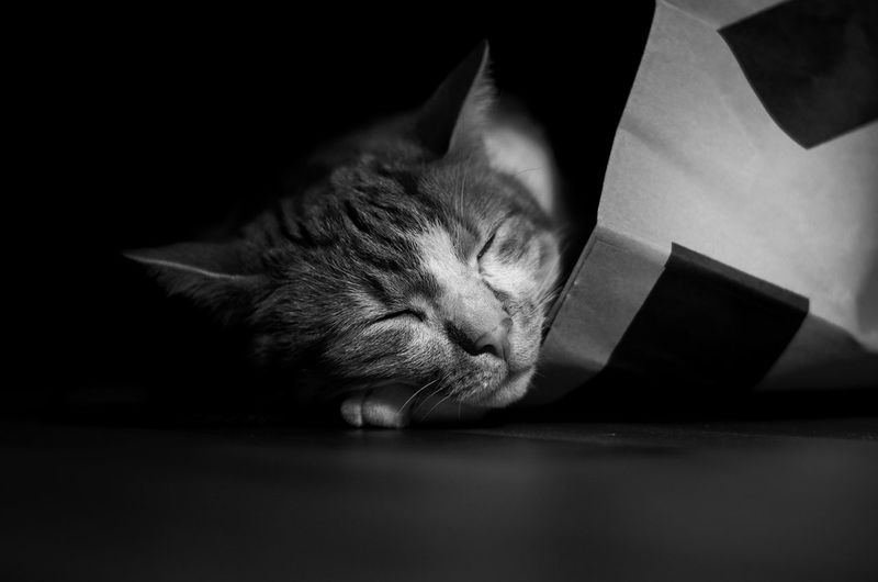 Cat In Bag Sweet Dreams Cat Cat Sleeping Catdreams Catlife Catnap Domestic Life Of A Cat Pets Resting Sleeping