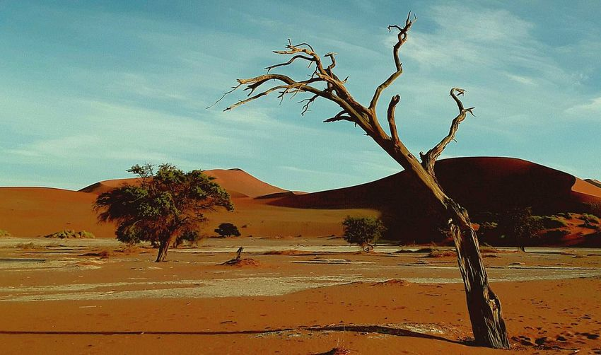 Desert Landscape Sossusvlei