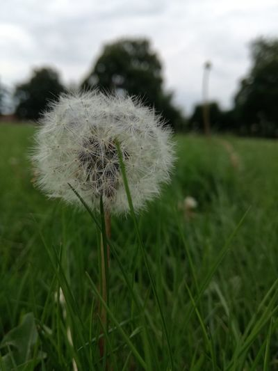 Nature Grass Fragility Close-up Outdoors Day No People Beauty In Nature EyeEmNewHere No Filter Needed