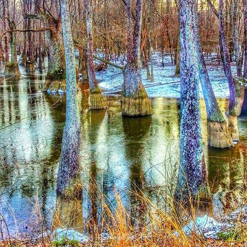 Frozen swamp 2. Royalsnappingartists Rsa_nature Rsa_ladies Rsa_urbex rurex_lady