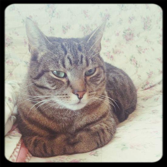 Making evil plans Cat Planning Evil Cat
