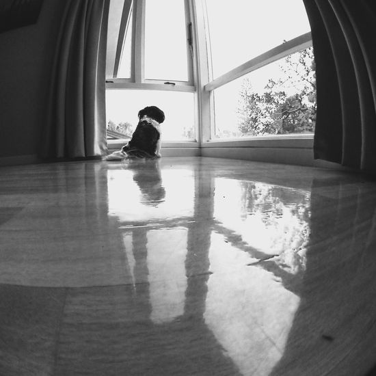 Max the dog pondering life. IPhoneography Olloclip Fisheye Olloclip Fisheye Dog Symmetrical Reflection Blackandwhite Window Shihtzu
