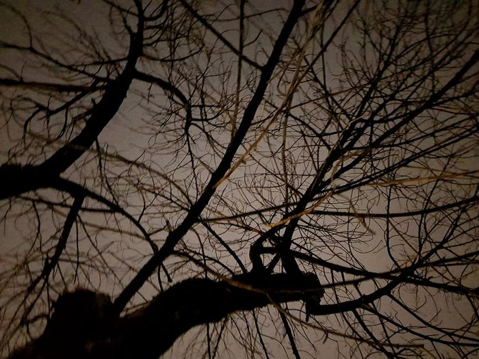Tree Branch Bare Tree Nature Silhouette Beauty In Nature Outdoors No People Low Angle View Tranquility Tree Trunk Sky Sunset Scenics Landscape Day Dead Things Dead Branch Night Tree Night Phototgrapgy Old Tree Weather Dead Dead Tree Fragility