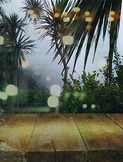 Palm Tree Tranquility Nature Outdoors Beauty In Nature Artphotography Artistic Photo Eye For Photography Double Exposure Fog Sky EyeEm Best Shots - Nature Check This Out