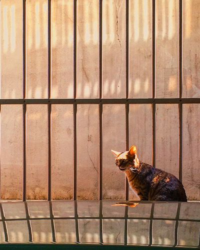 cat Daylight Light Cat Animal Animal Themes One Animal Vertebrate No People Fence Metal Sunlight Day Pets Domestic Animals Nature Domestic Cage Barrier First Eyeem Photo EyeEmNewHere Visual Creativity Summer Exploratorium