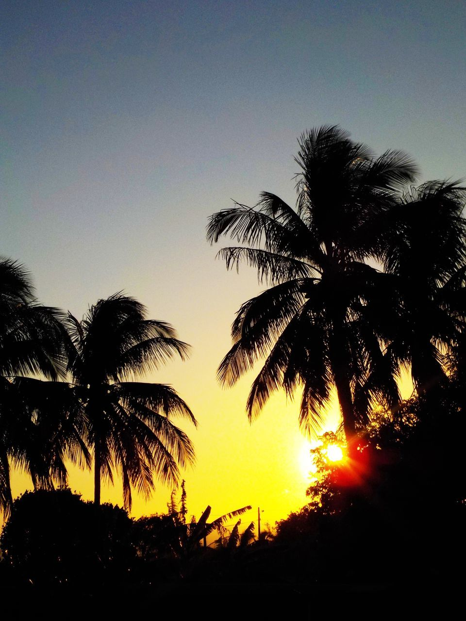 tree, palm tree, silhouette, sunset, nature, beauty in nature, clear sky, scenics, growth, low angle view, sky, tranquility, outdoors, no people, tranquil scene, day