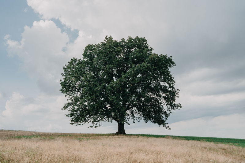 Alone Tree Beauty In Nature Cloud - Sky Day Environment Field Grass Growth Horizon Over Land Isolated Land Landscape Nature No People Non-urban Scene Outdoors Plant Scenics - Nature Single Tree Sky Tranquil Scene Tranquility Tree