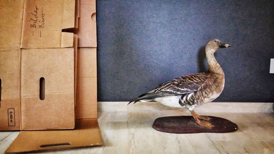 Photographer Artworks Photooftheday Photography Picoftheday Bird Animal Themes Animal Vertebrate One Animal Animals In The Wild Animal Wildlife Indoors  Wall - Building Feature Architecture Chicken - Bird Domestic Animals Nature