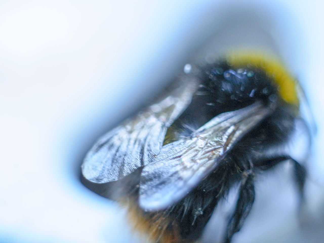 selective focus, close-up, invertebrate, animal, animal themes, insect, animals in the wild, no people, animal wing, day, one animal, animal wildlife, nature, extreme close-up, fly, housefly, outdoors, beauty in nature, macro, animal body part