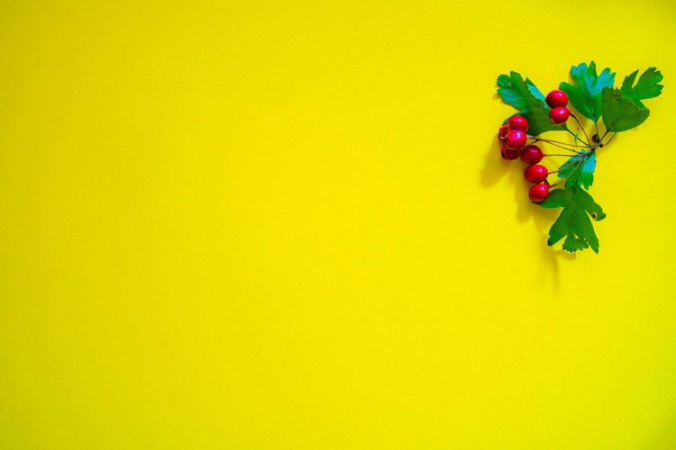 Close-up of multi colored flowers against yellow background