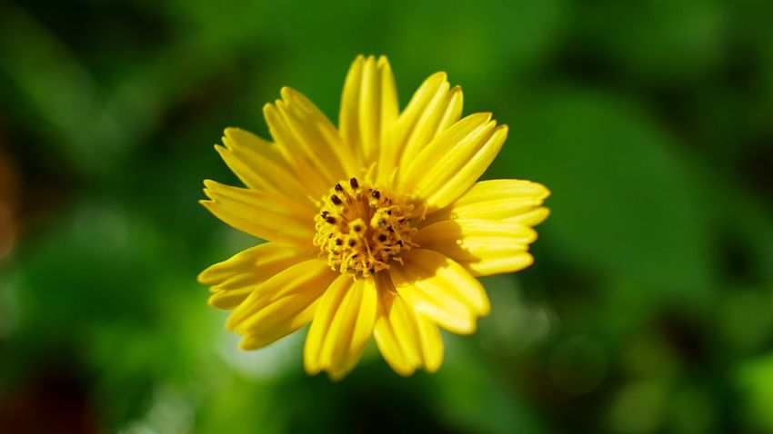 Flower Flowering Plant Flower Fragility Plant Yellow Petal Flower Head Beauty In Nature Close-up