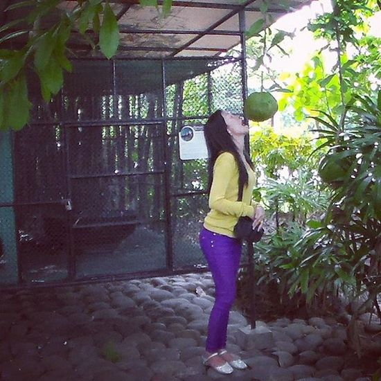 Miraclefruit Davao Memoriesmade