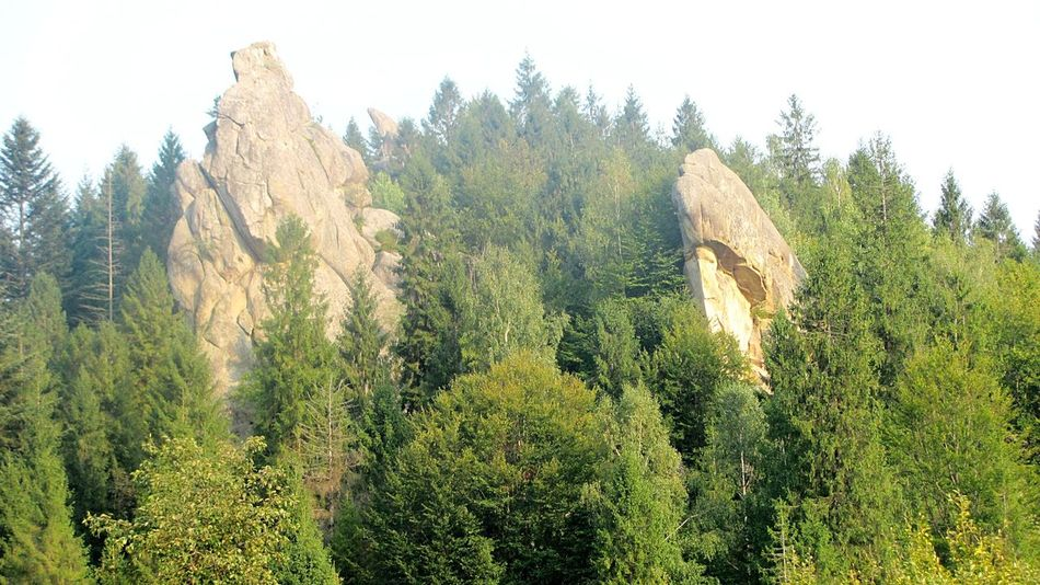 Forest Mountains Nature