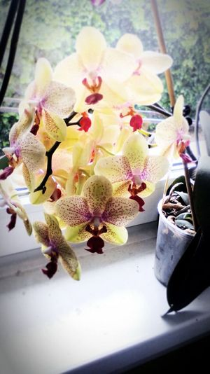 Orchids Flowers Nice!