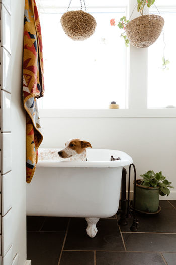 Dog sitting in bathroom at home