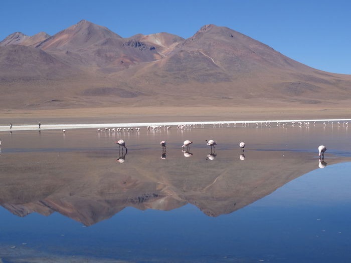 Beauty In Nature Blue Blue Sky Bolivia Clear Water Day Flamingo Idyllic Landscape Mountain Range Non-urban Scene Outdoors Reflection Remote Sky Tranquil Scene Uyuni Water