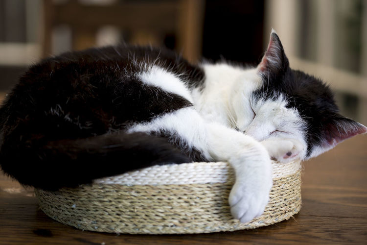 Sleeping Cat Animal Animal Themes Basket Cat Close-up Domestic Domestic Animals Domestic Cat Feline Focus On Foreground Home Interior Indoors  Mammal No People One Animal Pets Relaxation Resting Vertebrate Whisker Wicker