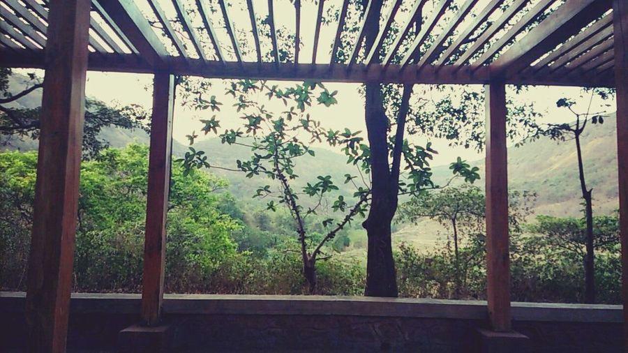 Mumbai 😍 Trees Nature Photography PEACE ✌🏼️ No People Sunlight Nature Growth Tree Day Sky First Eyeem Photo