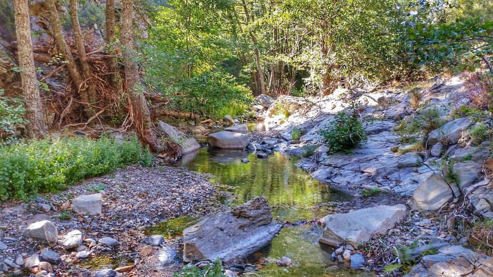 Fiume Outdoors Nature Beauty In Nature Water Magnificentsardegna Landscape Sardegna Mountain Scenics Riverview Riverside Wildlife Rocks In Water Rocks And Trees