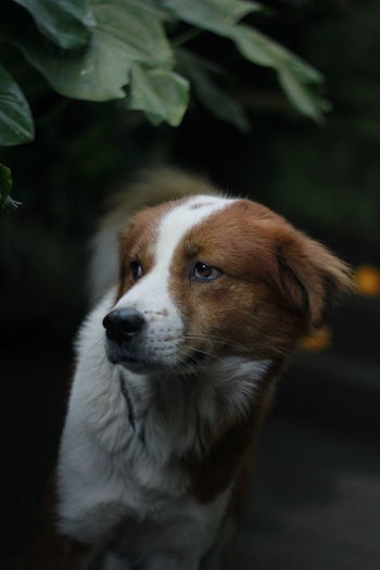 Close-up of puppy looking away