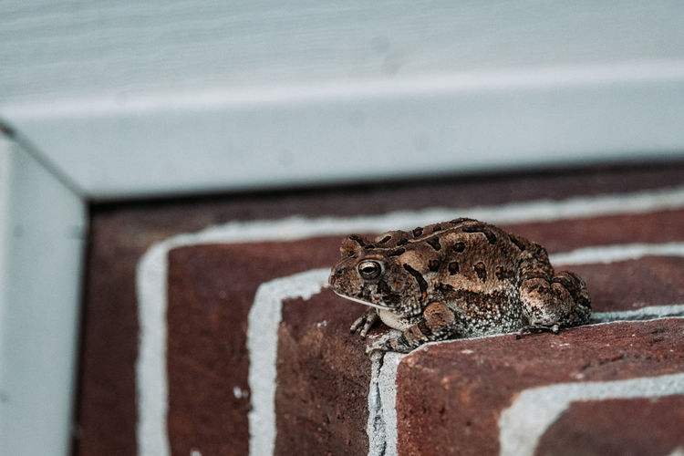 Close-up of a toad on wall