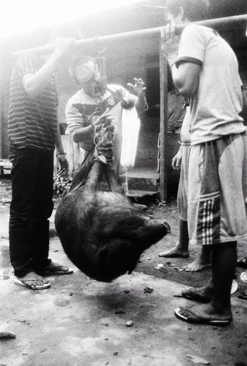 Pig for the ancestors. Pig is important for ngaju dayaks as part of their rituals. That is for their interraction to the ancestors that may help them to bring more wealthy condition. Anthropology Visual Anthropology Ethnography INDONESIA Blackandwhite Documentary Documentary Photography