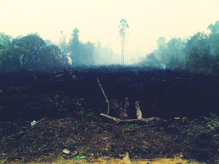 Pollution In My World Omg Forest Fire Air Polution kebakaran hutan mengakibatkan kabut asap yg menyebabkan polusi udara..