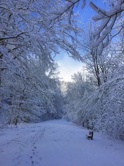 Saw it captured it... Winter Snow Beauty In Nature Cold Temperature Outdoors No People Tree Nature Close-up Sawonmyadventure No Filter, No Edit, Just Photography Only God Can Create Such Beauty Landscape Beauty In Nature Snow Covered Branch Blue Skies