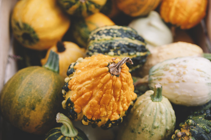 A number of small pumpkins in a crate Agriculture Autumn Basket Close-up Day Food Food And Drink Freshness Gourd Green Groceries Harvesting Healthy Eating Market Miniature Orange Orange Color Organic Outdoors Pumpkin Ripe Squash - Vegetable Thanksgiving Yellow Yellow Color